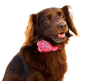 The Flower Child Pink Leather Dog Collar