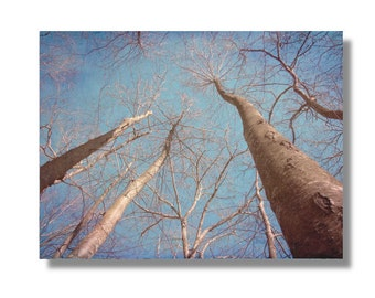 Autumn Trees Tall Bare Trees Abstract Nature Photo Tall Trees in Blue Gray Turquoise Sky Bare Branches, Winter Scene, Autumn Trees, CT Woods