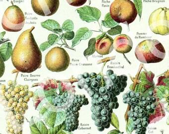1908 Vintage botanical illustration Vintage Fruits poster Kitchen decor Botanical art Fruit print French Kitchen decor French country decor