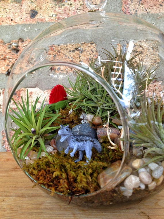 Jumbo Multi-Level Dinosaur and Air Plant Moss Terrarium with Charm - The Best Birthday or Fathers Day Gift EVER