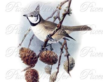 BIRDS Instant Download Digital image, Digital Downloads, crested titmouse birds clipart 228