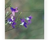 Bluebell Botanical Photography, Nature, Macro, Home Decor, 5 x 5 print Fine Art Photography Print