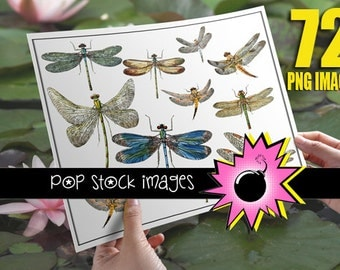 Clipart Dragonfly - Dragonfly Clip Art - Entomology - Digital Clipart Dragonflies - 72 PNG Images - Vintage Dragonfly - Digital Scrapbooking