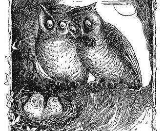 Owl's Nest (1887)