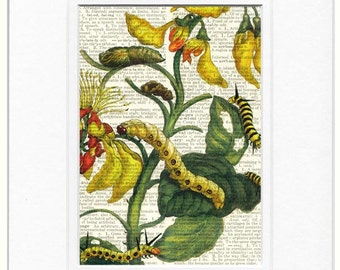 caterpillars and flowers II print