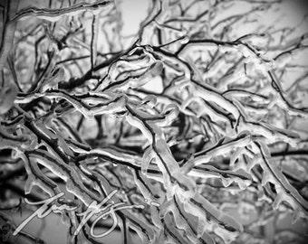 BOGO SALE (Buy one, get one free) - Ice Lightning - Fine art print - Borderless Photo