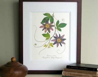 Pressed flower print, 11x14 double matted, Passion Vine flowers, wall art decor no. 0039