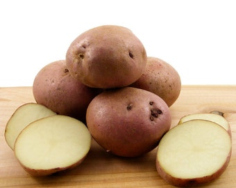 Sangre Seed Potatoes 2 Lbs. Certified Organic Delicious Red Skinned Variety Red Seed Potatoes - Spring Shipping Non-GMO