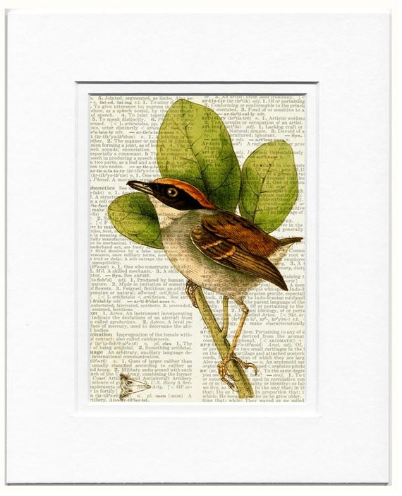 Hooded Gnateater male bird print