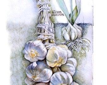 Garlic in My Garden--print from original watercolor painting--food & kitchen art, food painting, kitchen, garden, herbs, garlic