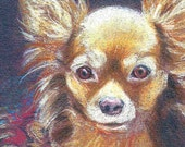 Chihuahua Custom Pet Portrait original ACEO drawing 3.5 x 2.5 colored pencil miniature art from photos