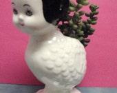 Dolly bird