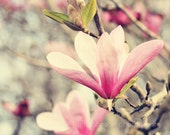 spring decor flower photography pink tulip trees japanese magnolia pink home decor pink wall art nature photography