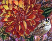 White Crowned Sparrow with Dahlia 8x8 inch Archival Print