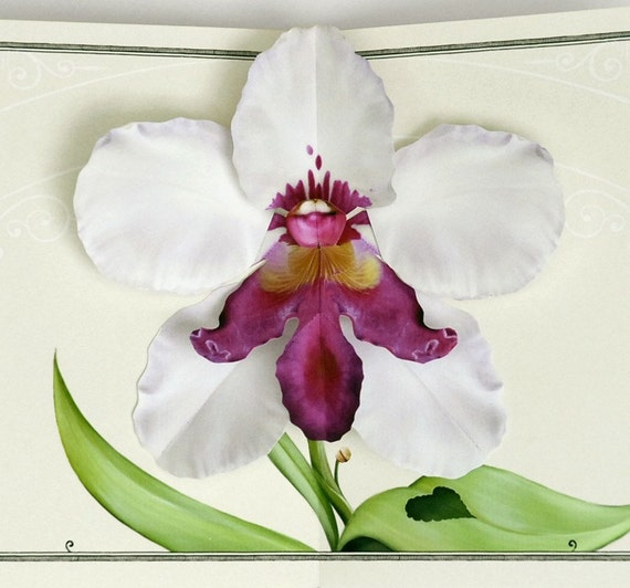 White Orchid Flower pop up card