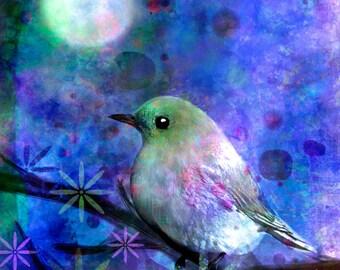 Midnight Oasas bird moon moondust