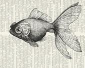 goldfish II dictionary page print