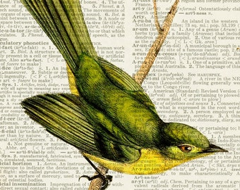 Bird, Yellow Tyrannulet print