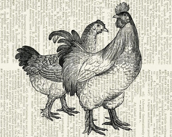 chickens - vintage chicken dictionary page print