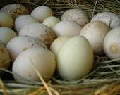 Egg Gourd Seeds - Grow an Egg Garden - Organic Heirloom Seed - Great for Waldorf Classrooms