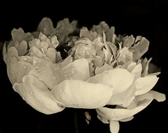 Peony Art Print, Sepia Photography,  Flower Wall Decor, Floral Artwork, Flower Photography