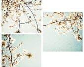 set of 3 pale blue and white blossom photos- floral decor, flower wall art, shabby chic decor, nature photography, trees aqua white