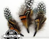 3 - Feather Picks - Guinea & Pheasant Feathers - Boutonniere - Earrings