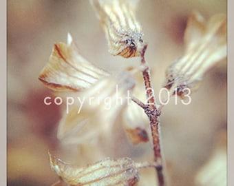5x5 Fine Art Photograph - Winter White Flowers -  Instagram photo