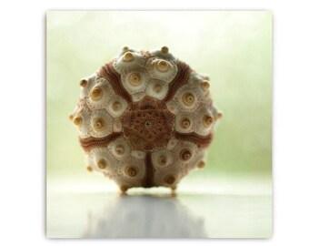Sputnik Sea Urchin Print Natural History Photography  Nature  Decor Nature Ocean Sea  Earth Echinoderm Brown Urchin