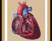 Antique Anatomical Heart Cut-Away cross stitch pattern PDF