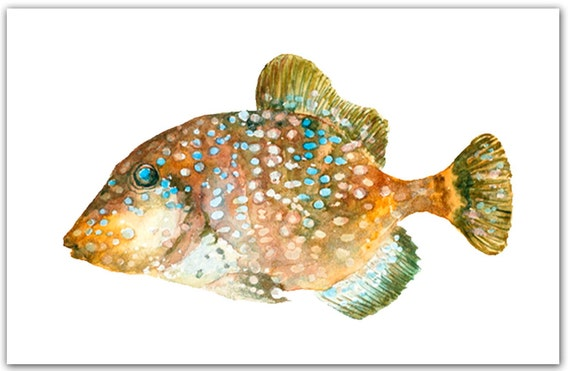 Trigger Fish 8x10 Giclee Print Watercolor Painting Brown