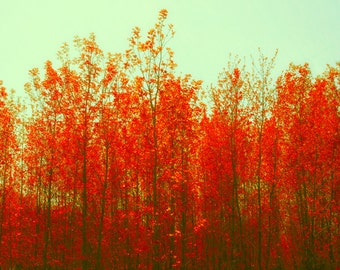 Photography Orange leaves photography green sky fall burnt orange aqua fall foliage leaf photo nature ruby forest