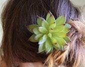 SALE. SUCCULENT. Large faux green flower hair clip, Desert wedding, beach hair. succulent wedding. a forever flower keepsake
