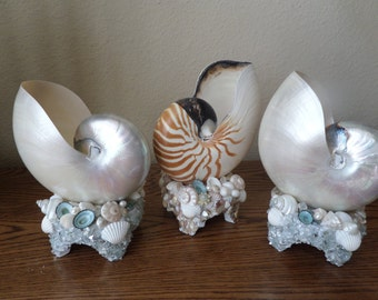 Beach Decor- Your choice of One of kind Nautilus Shell table  lights