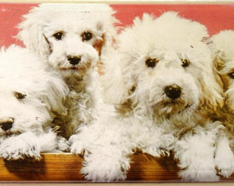 Vintage Toffee Tin White Fluffy Puppies