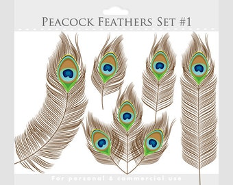 Peacock feather clipart - peacock clip art, feathers, brown, green, blue, aqua, elegant digital designs for commercial and personal use