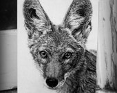 Coyote greeting card 4x6