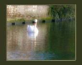 Swan Lake, 10 x 12 Fine Art Giclee Print