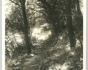 Vintage Artistic Photo Game Bird Sits In Path Through Woods Photograph
