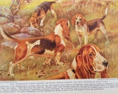 Basset Hounds and Beagles Vintage Dog Print  Illustration by Edward Herbert Miner 1940s