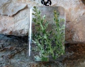 Preserved Yarrow Foliage in Resin, pendant