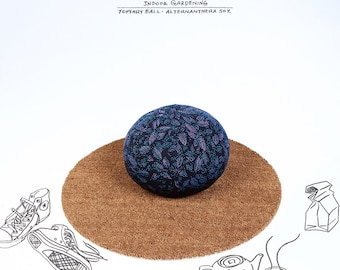Topiary ball beanbag chair - alternanthera small - Free shipping world-wide