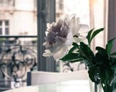 Paris Photography - Evening light in the Apartment - Paris Baby Pink Peony, emerald green, iron balcony, paris home decor