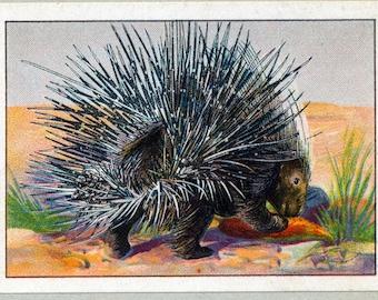 1932 Vintage Spanish Sheet of Illustrations on Animal Defences / Sheet 8