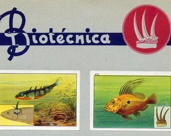 1932 Vintage Spanish Sheet of Illustrations on Animals Mechanisms. Sheet 3