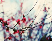 Winter Flowers - Fine Art Print - Nature Photography -  Etsy Wall Art - TFTeam