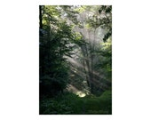 Enchanted Forest Woodland Trees Photograph, Earthy Living Room Decor, Nature Photography, Sunlight in Trees Wall Print, Magical Inspiration