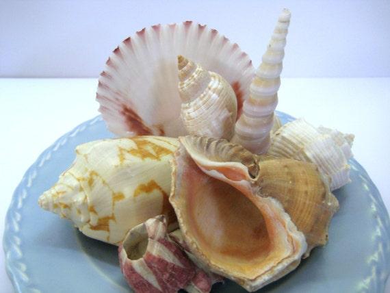 Seashell Centerpiece Beach Cottage Decor Coastal Decor California Pottery Plate