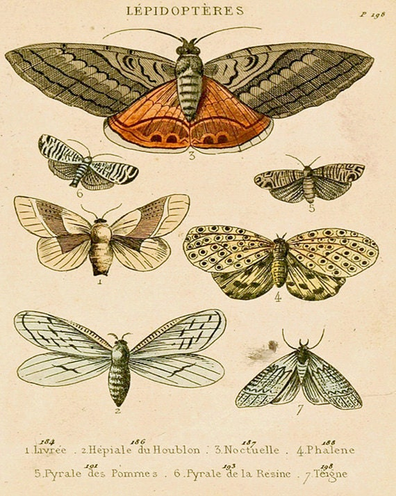 "Antique Natural History Print ""The Study of Moths"" Woodland Forest Butterfly Moth French Vintage"