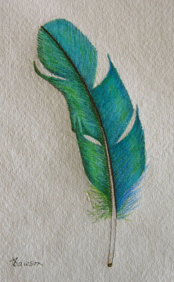 Teal Feather original coloured pencil drawing